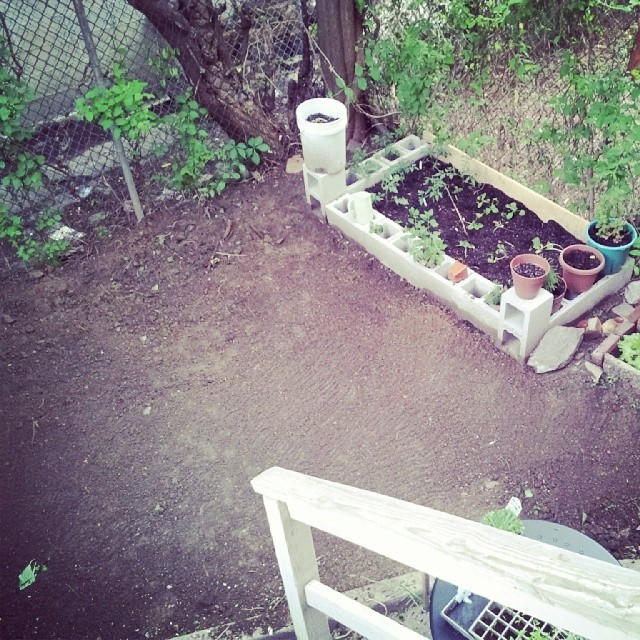 backyardprogress