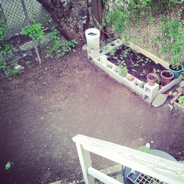 backyardprogress